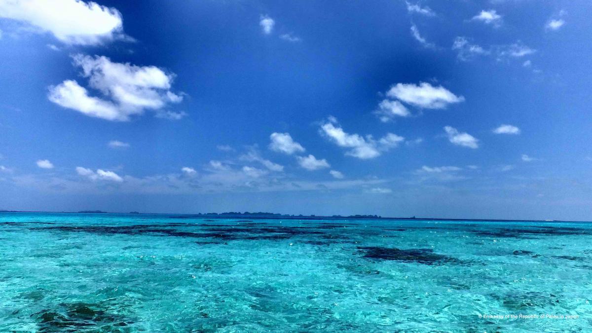 パラオの穏やかで透明な海 / Palau's calm and clear waters.